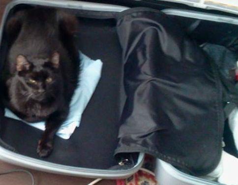 cat_bag.jpg