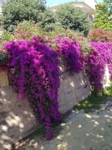 Flowers in Manacor
